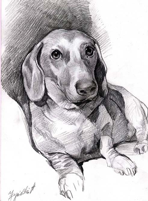 portret psa olowkiem